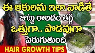 రాలిపోయిన జుత్తును తిరిగి మొలిపించే జామ ఆకులు I Guava Leaves for Hair Growth I Everything in Telugu