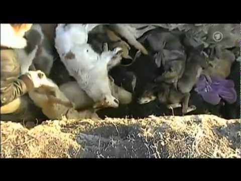 Hunde Lebendig Verbrannt Für Die Fussball Em 2012 In Der Ukraine