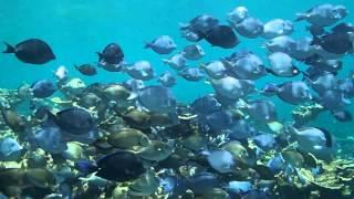 flora y fauna marina