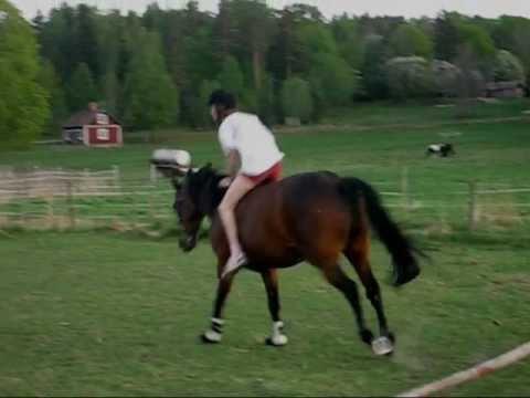 FIGHT ON! Bareback riding, fails, crazy horses