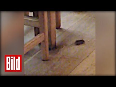 Mäuseplage bei Vapiano - Bild-Leser Video