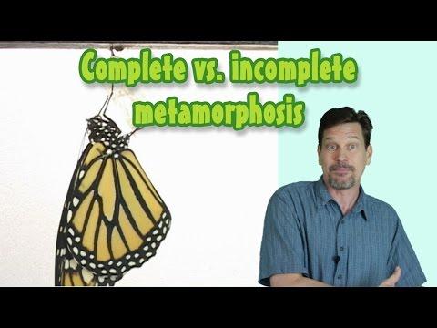 Complete vs. Incomplete Metamorphosis for kids: Larva, pupa, nymph, naiad defined