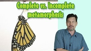 Complete and Incomplete metamorphosis--insect growth, life cycles STAAR science video