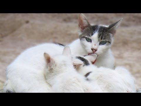 公園の猫が子猫を生んだようで、授乳中のところを撮りました。貴重なシーンをありがとうと猫達に伝えたいです。ママの至福の顔に癒されました。子猫たちもとてもかわいいです。