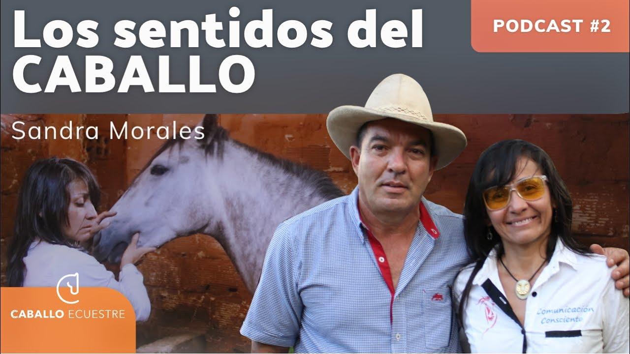 Los sentidos del caballo otra forma de ver el mundo 🐴 - Sandra Morales