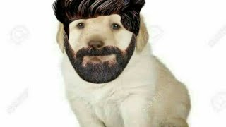 Ola te amo agamos secso - Perrito chabo truste