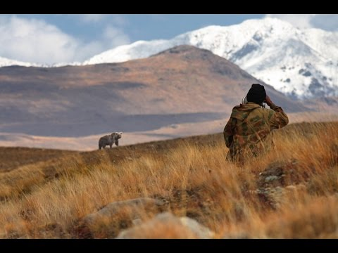 Deosai National Park - Home of The Himalayan brown bears