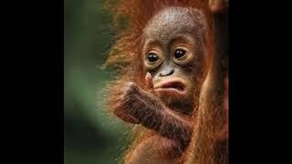 картинки смешные  животные, слайд шоу животные.