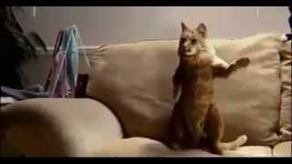 Кошки танцуют #2