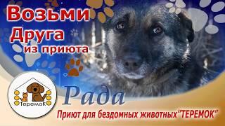 """Приют Для Бездомных Животных """"ТЕРЕМОК"""": Рада"""