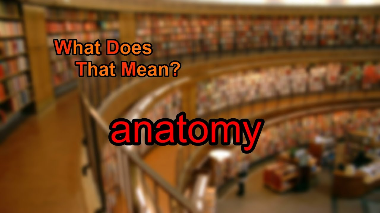 What Does Anatomy Mean Youtube