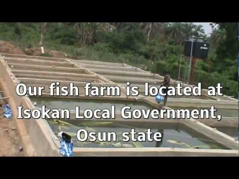 Piggery and Catish Farm in Nigeria 1.MPG