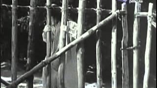 Película La loba 1965