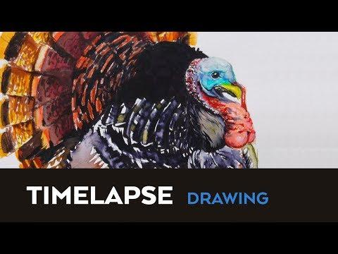 TimeLapse Drawing: TURKEY