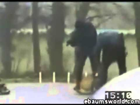 Những pha bắt cướp siêu đẳng của chó nghiệp vụ - MCG4ever.com