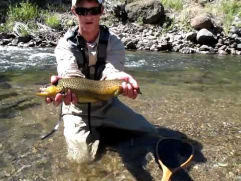 Tanner east carson river brown trout youtube for East fork lake fishing report
