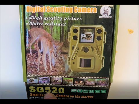 Best Budget Trail Camera - Setup With Image Examples - Boly Trail Camera SG520