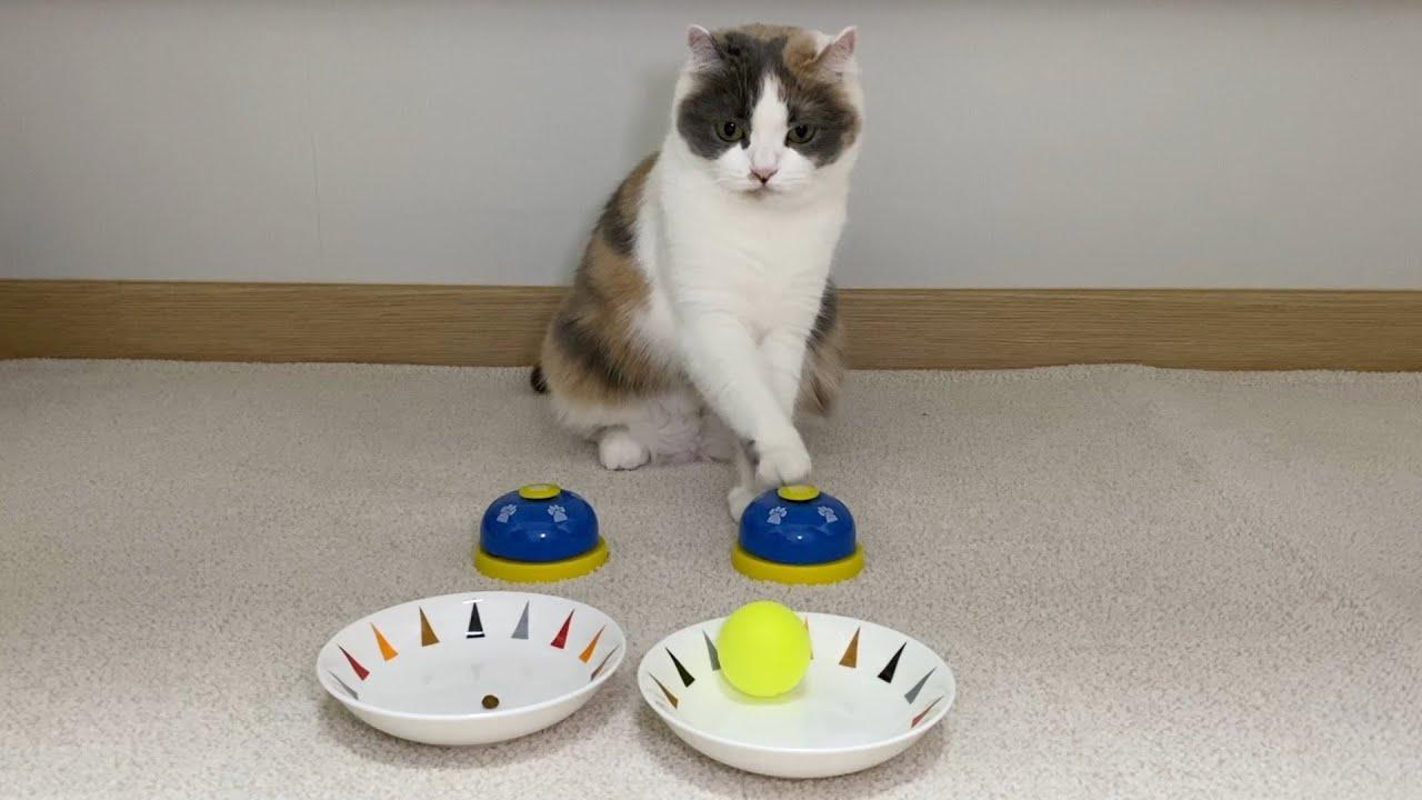 똑똑한 강아지만 한다는 개인기를 고양이가 할 수 있을까?