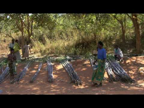 Building Business in Malawi with Social Cash Transfer