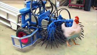 استخدام التكنولوجيا فى مزارع الدجاج الحديثة