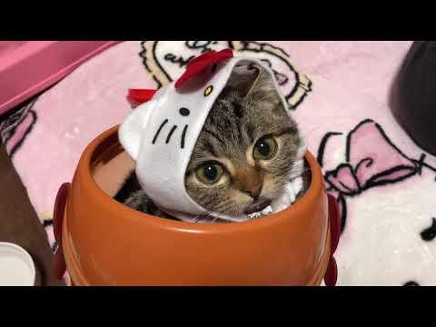 ぐうかわ♪ポップコーンケースにすっぽり入ってしまった子猫
