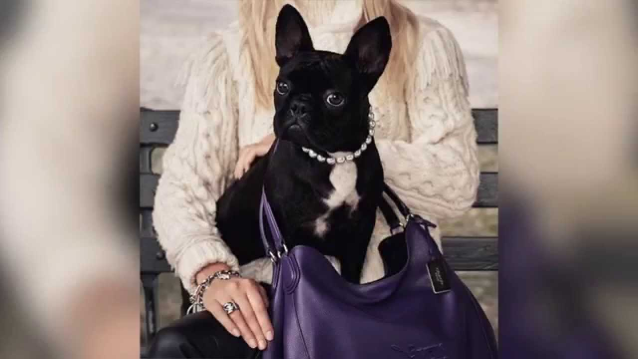 Buy Gagas lady dog coach picture trends