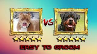Cuộc chiến của những chú chó chiến Rottweiler VS Pitbull new 20019 (P1)