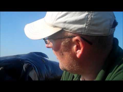 לוויתן ענק על החוף