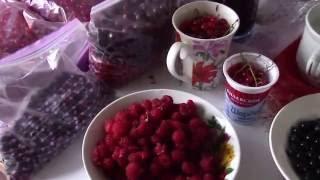 Летний ВЛОГ: подарки сыну, ягоды на зиму, коты.