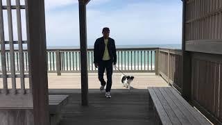 Amebaブログ「狆犬ちづひめ」2018年4月26日投稿をご覧ください。