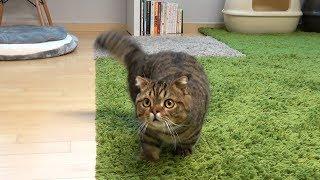 부르면 강아지처럼 달려오는 고양이
