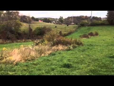 Tudor hill work