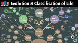 Evolution & Classification Of Life: From Single Celled Bacteria To Humans