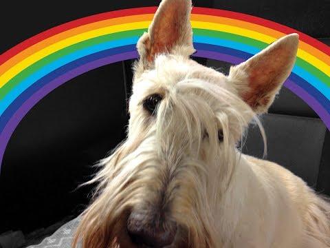 In Memory Of Scottish Terrier Greenya