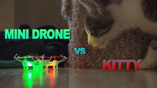 Cat vs Drone