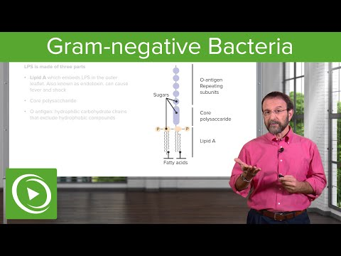 Gram-Negative Solution: Lipopolysaccharide & Bacterial Structure – Microbiology | Lecturio