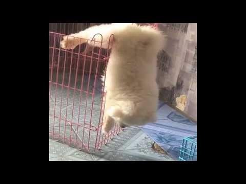 Funny dog: Prison break - The dog version - OLIVER 11/2017