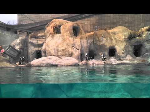 Vlogging - Oklahoma Tulsa Zoo