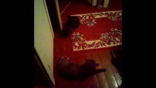 Наши коты любят друг друга