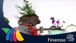Yo amo mi dinero: Éxito de una familia, trabajar juntos | Noticias de Finanzas