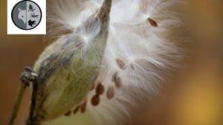 Étrange insecte? - Semaine no.9 - Films Nature Web TV