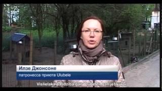 Video, Приют для животных Ulubele