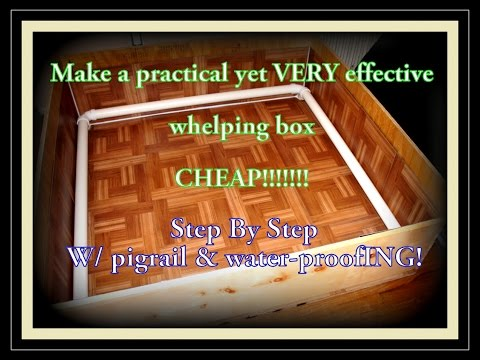 Making A Whelping Box: Easy Step By Step Guide With Pigrail CHEAP!