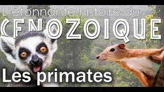 Evolution des primates - Paléontologie - Simplex Paléo