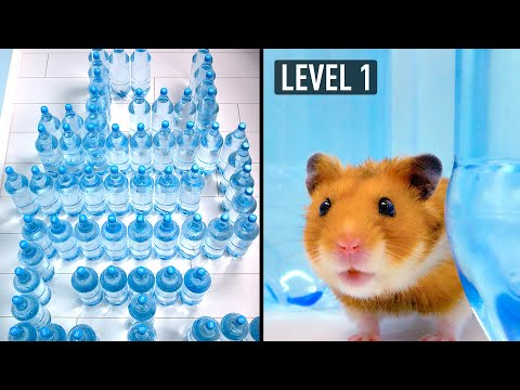 Amazing Water Bottle Maze For A Cat And A Hamster