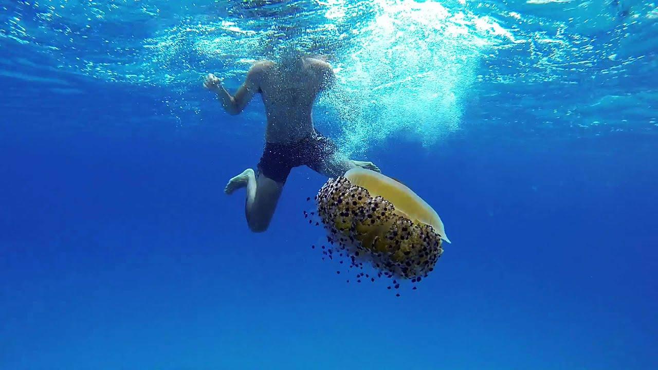 playing with big jellyfish gopro hero3 youtube