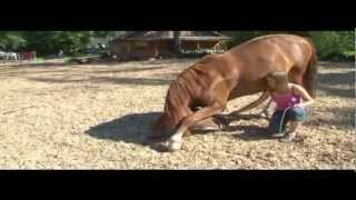 Лошадиный брейк-данс.Видео KingiseppNews.Ru(, 2013-04-06T06:32:20.000Z)