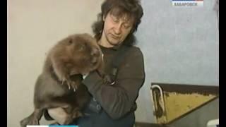 Вести-Хабаровск. Русские животные в цирке