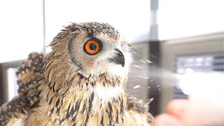 Owl enjoys stay home with his owner
