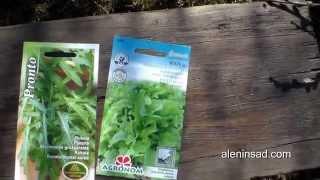 РАННЕЕ выращивание в теплице ЗЕЛЕНИ. 1. Посев // Cultivation of greens in greenhouse. 1. Starting(Первое видео из цикла